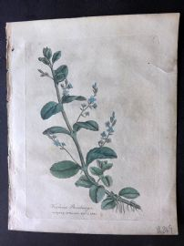 Woodville Medical Botany 1790's Hand Col Print. Veronica Beccabunga. Brooklime